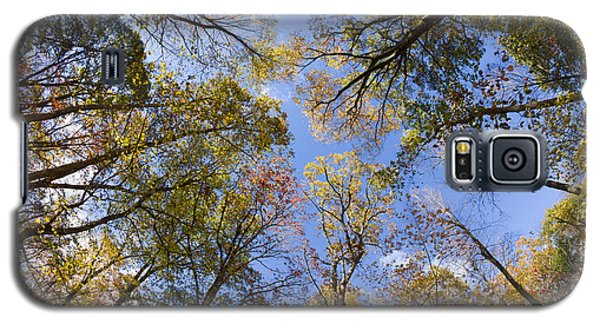 Fall Foliage - Look Up 2 Galaxy S5 Case