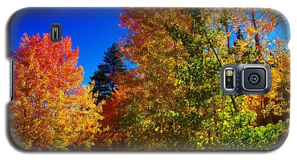 Fall Foliage Palette Galaxy S5 Case