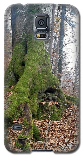 Galaxy S5 Case featuring the photograph Fall In Burgdorf by Felicia Tica