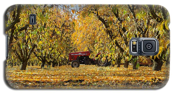 Fall In The Peach Orchard Galaxy S5 Case