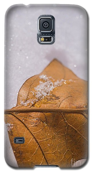 Galaxy S5 Case featuring the photograph Fall Into Winter Glitter by Julie Clements