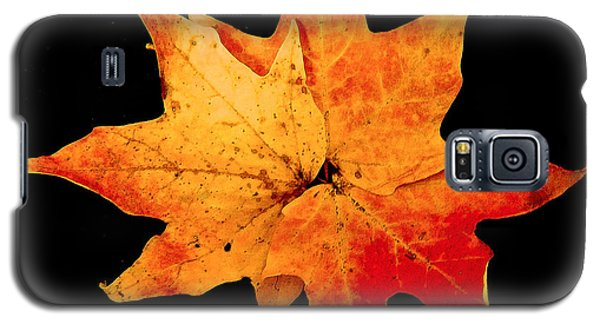 Galaxy S5 Case featuring the photograph Fall Leaf Trio by Dee Dee  Whittle