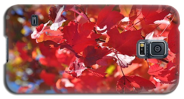 Galaxy S5 Case featuring the photograph Fall Leaves In Oregon by Mindy Bench