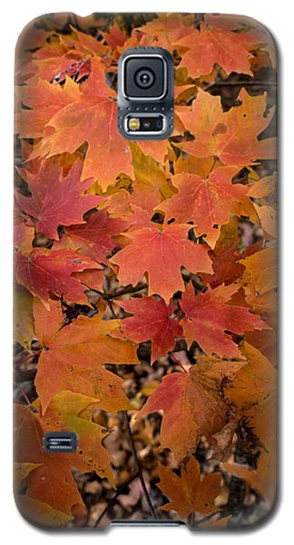 Galaxy S5 Case featuring the photograph Fall Maples - 03 by Wayne Meyer
