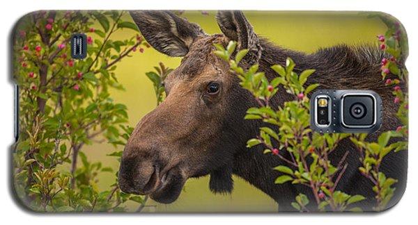 Fall Moose Galaxy S5 Case