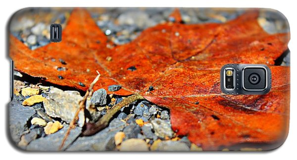 Fall Road Galaxy S5 Case