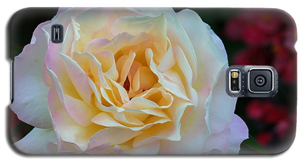 Fall Rose Bloom Galaxy S5 Case