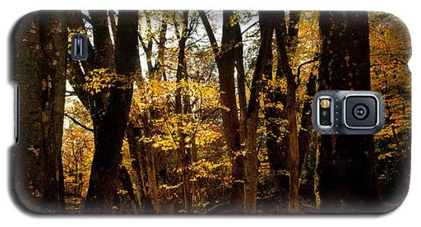Fall Scene In Bidwell Park Galaxy S5 Case