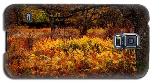 Fall Shadows - Dolly Sods West Virginia Galaxy S5 Case by Dan Carmichael