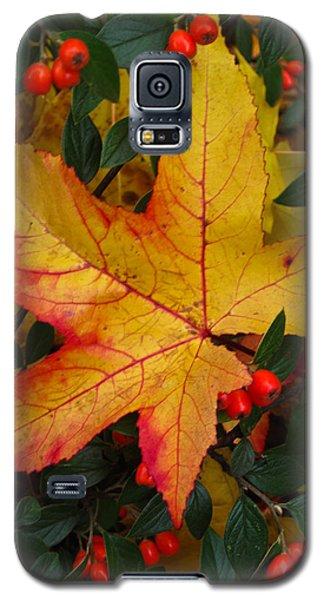 Fall Splendor Galaxy S5 Case
