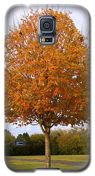 Fall Sugar Maple Galaxy S5 Case by Melinda Fawver
