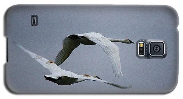 Galaxy S5 Case featuring the photograph Fall Swans by Al Fritz