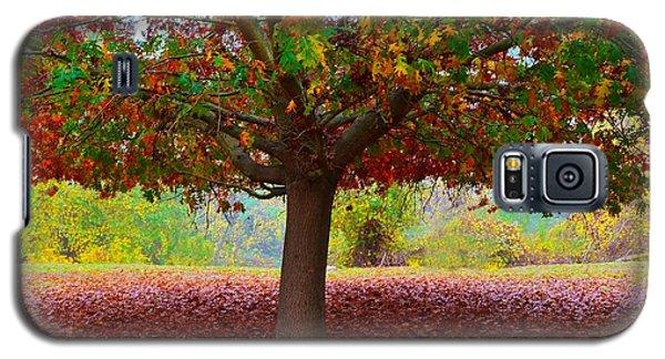 Fall Tree View Galaxy S5 Case