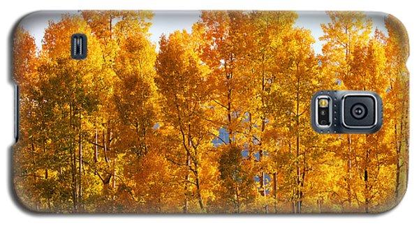 Fall Trees 8x10 Crop Galaxy S5 Case