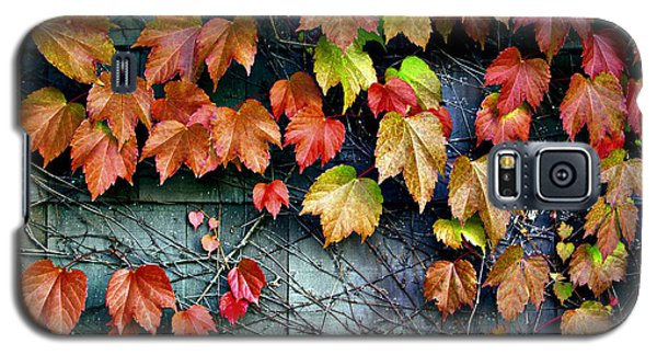 Fall Wall Galaxy S5 Case by Kjirsten Collier
