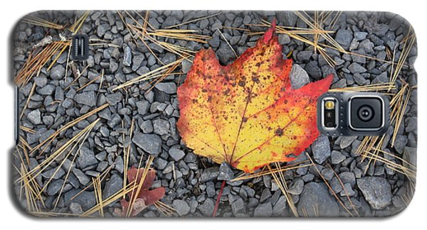 Galaxy S5 Case featuring the photograph Fallen Leaf by Dora Sofia Caputo Photographic Art and Design