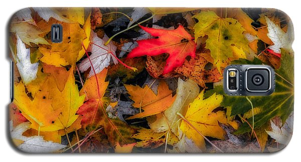 Galaxy S5 Case featuring the photograph Fallen Leaves by Dennis Bucklin