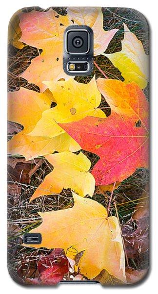 Fallen Leaves Galaxy S5 Case
