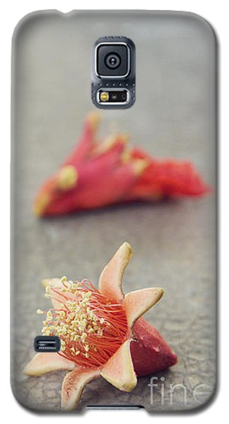 Fallen Pomegranate Blossoms Galaxy S5 Case