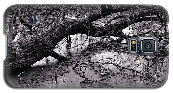 Fallen Tree Galaxy S5 Case