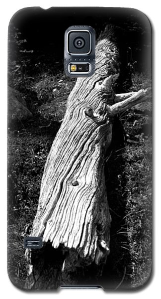 Galaxy S5 Case featuring the photograph Fallen Tree - Whistler Mountain by Amanda Holmes Tzafrir