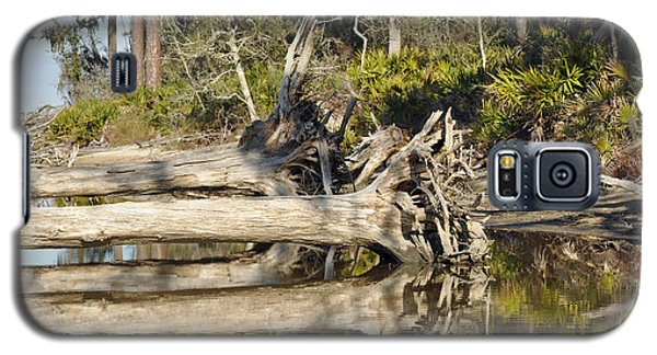 Fallen Trees Reflected In A Beach Tidal Pool Galaxy S5 Case