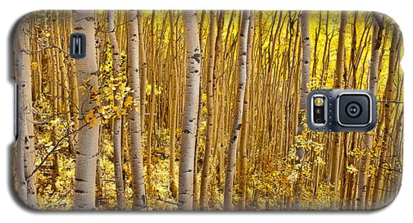Galaxy S5 Case featuring the photograph Fall's Golden Light by Steven Reed