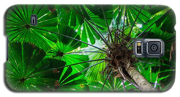Galaxy S5 Case featuring the photograph Fan Palm Tree Of The Rainforest by Peta Thames