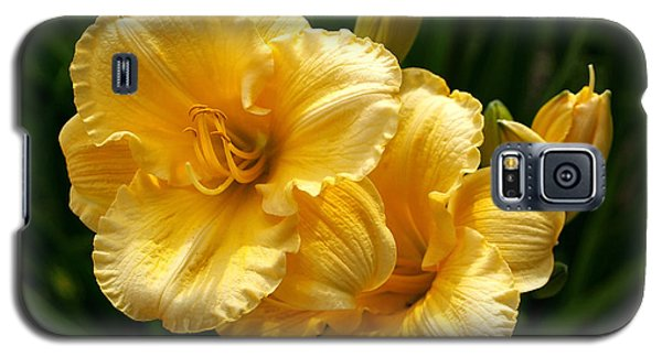Fancy Yellow Daylilies Galaxy S5 Case by Rona Black