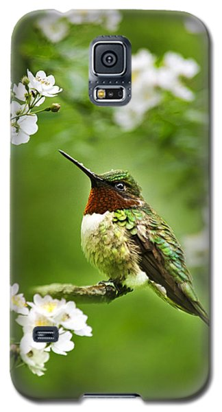 Fauna And Flora - Hummingbird With Flowers Galaxy S5 Case by Christina Rollo