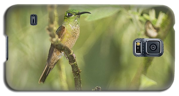 Fawn-breasted Brilliant Hummingbird Galaxy S5 Case