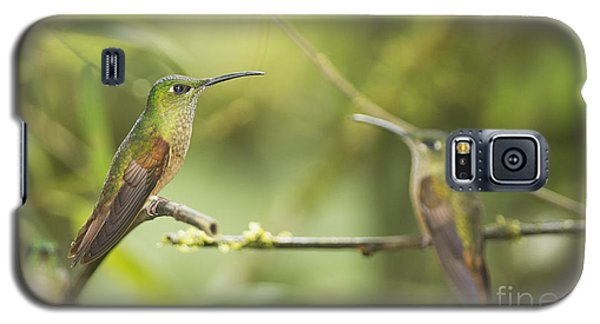 Galaxy S5 Case featuring the photograph Fawn-breasted Brilliant Hummingbirds by Dan Suzio