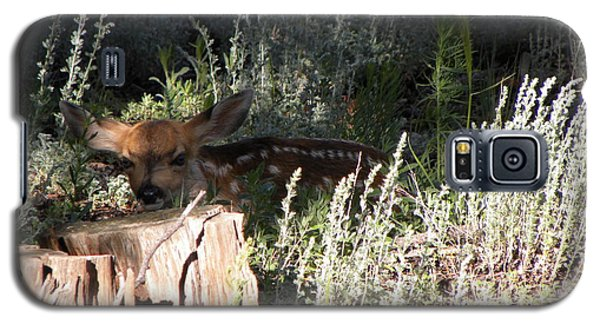 Fawn Front Yard Divide Co Galaxy S5 Case