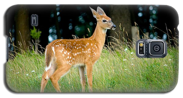 Fawn Galaxy S5 Case by Shane Holsclaw