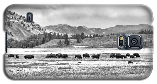 Feeding Bison And Scenic View  Galaxy S5 Case