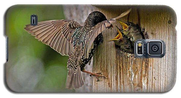 Feeding Starlings Galaxy S5 Case by Torbjorn Swenelius