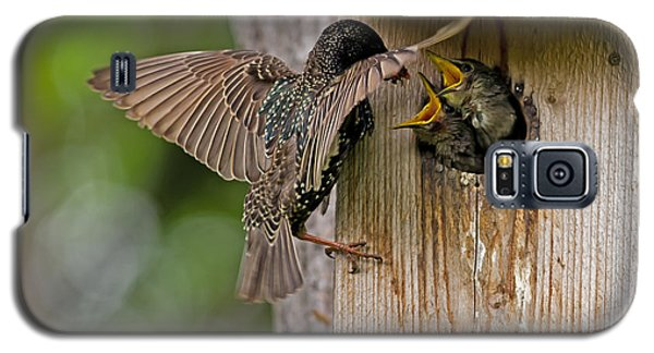 Feeding Starlings Galaxy S5 Case by Torbjorn Swenelius