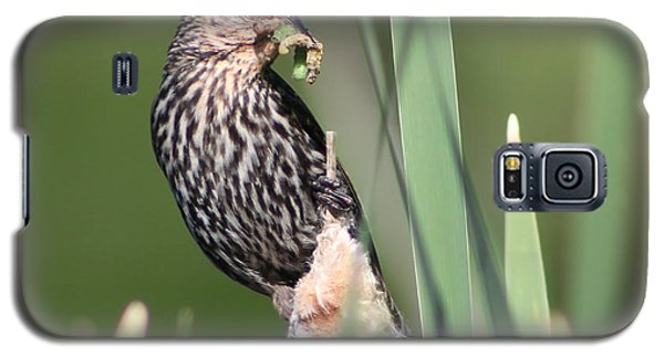 Galaxy S5 Case featuring the photograph Feeding Time by Anita Oakley