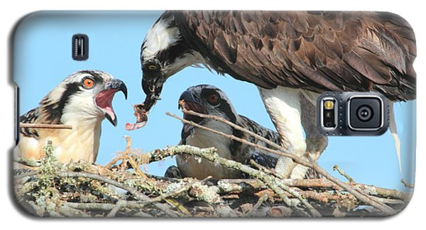 Galaxy S5 Case featuring the photograph Feeding Time by Geraldine DeBoer