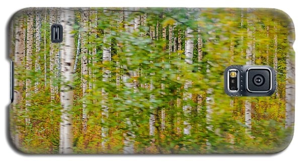 Feels Like Autumn In A Forest Of Birch Trees Galaxy S5 Case