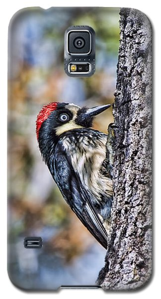 Galaxy S5 Case featuring the photograph Female Acorn Woodpecker - Phone Case Design by Gregory Scott