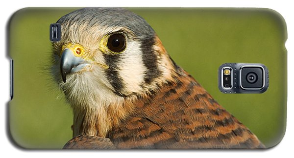 Galaxy S5 Case featuring the photograph female American Kestrel by Doug Herr