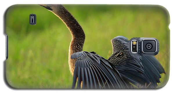 Female Anhinga Drying Out Wings Galaxy S5 Case