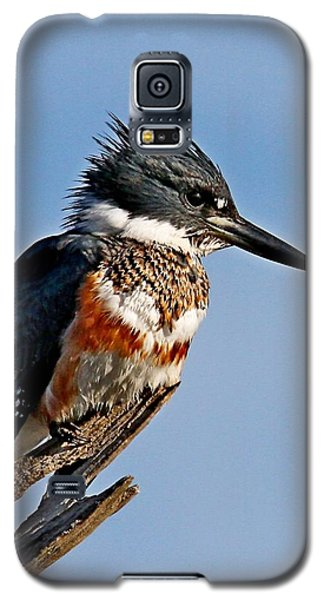 Female Belted Kingfisher Galaxy S5 Case