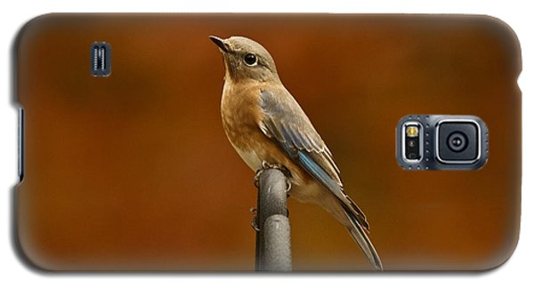 Female Bluebird Galaxy S5 Case