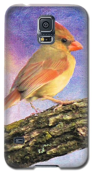 Female Cardinal Away From Sun Galaxy S5 Case by Janette Boyd