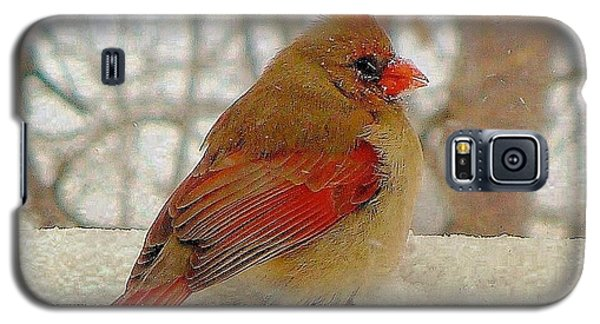 Female Cardinal Caught In Snowstorm Galaxy S5 Case