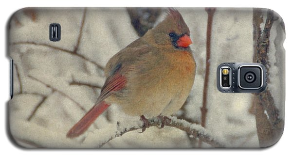 Female Cardinal In The Snow II Galaxy S5 Case