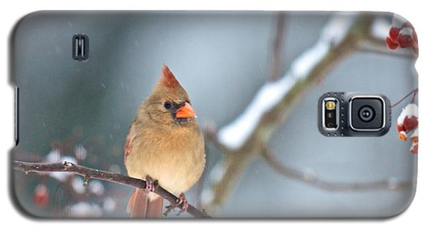 Female Cardinal On Cherry Tree In Snow Galaxy S5 Case