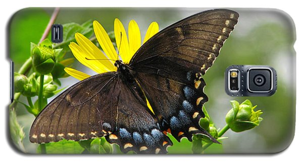 Galaxy S5 Case featuring the photograph Female Dark Form Swallowtail Butterfly  by Eva Kaufman